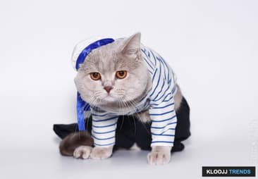 Adorable Cat Outfits & Accessories