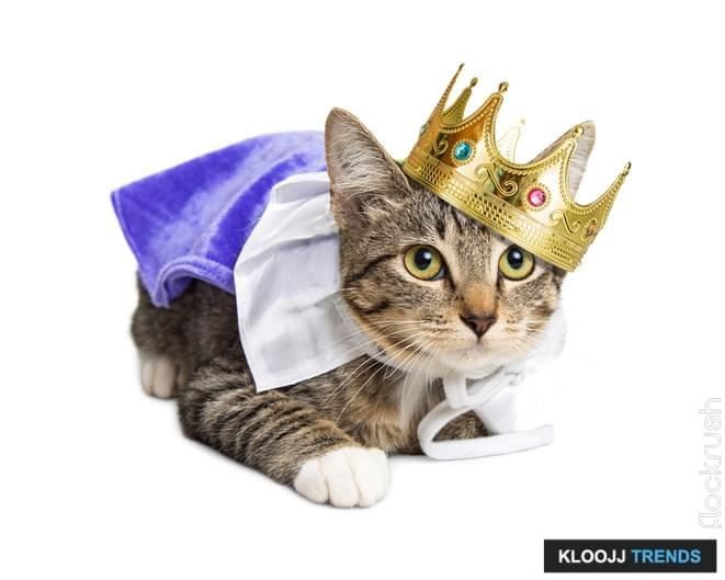 Cute kitten wearing royal prince Halloween costume