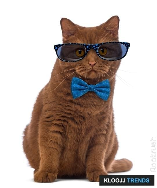 British Shorthair wearing glasses and a bow tie in front of white background