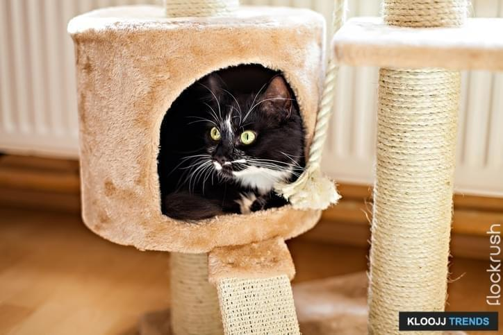 Beautiful cat laying in box on the scratching post