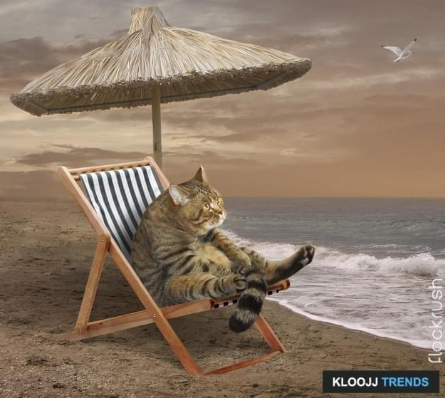 The lonely cat is on the beach. He is sitting on a sunbed under a reed umbrella.