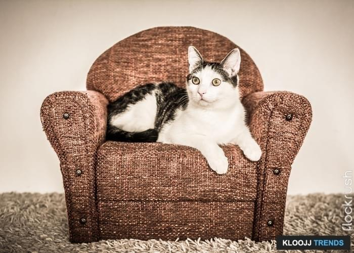 White and gray cat resting on miniature brown armchair.