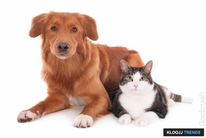 Looking cat and dog, side by side. White background.