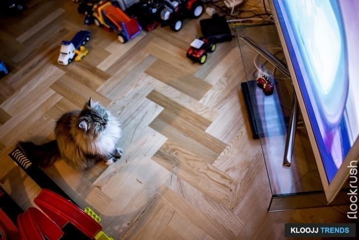 High angle view of a cat watching TV at home.