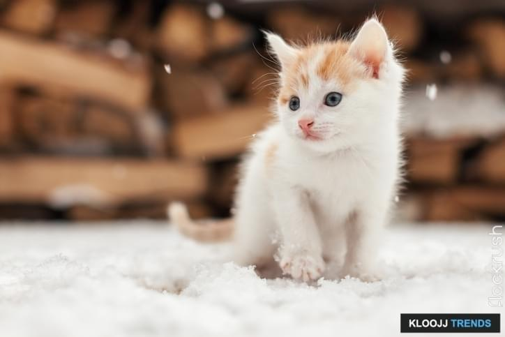 Small red lonely kitten on snow, outdoors
