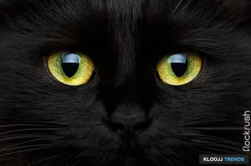 Why We Should Love, Not Fear, the Black Cat?