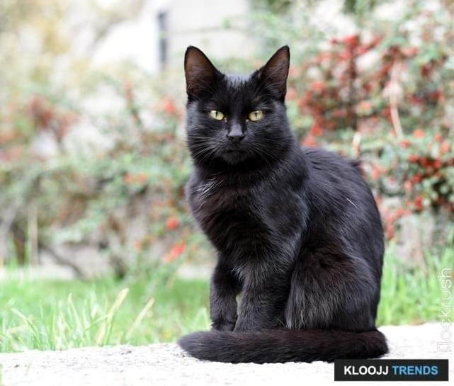Photo of a black kitty on the street. On the background, there are grass and plants, which are out of focus.