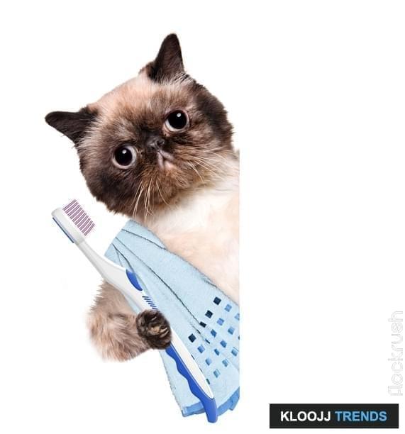 Brushing teeth cat behind a white banner. Creative.