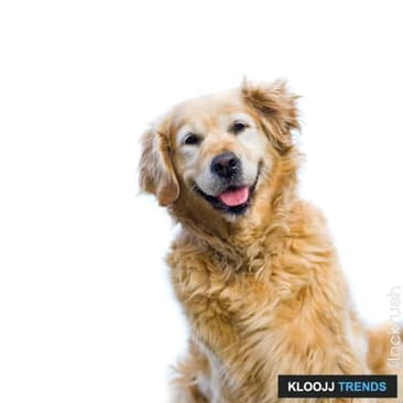 Let Your Senior Dog Feel Like a Puppy Again