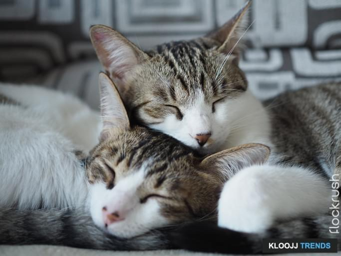 Two lovely domestic cats are sleeping on a sofa