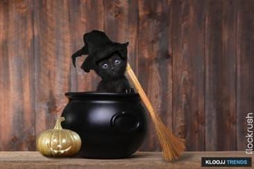 Potential Halloween Dangers For Your Cats