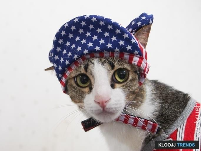 Kitty Dress up American Style