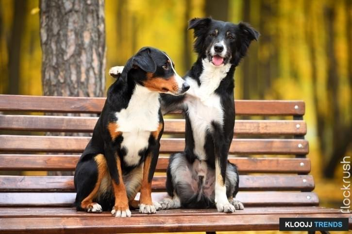 Two dogs sitting on a bench in the park