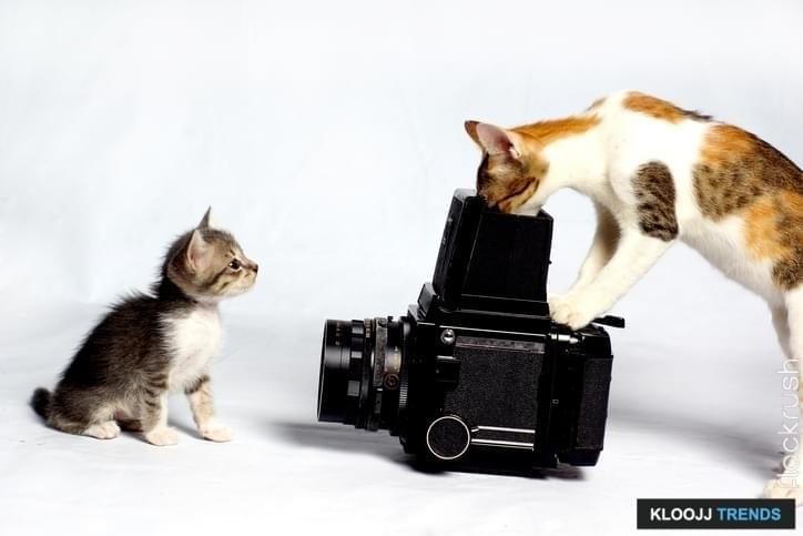 cat taking photo of a cat